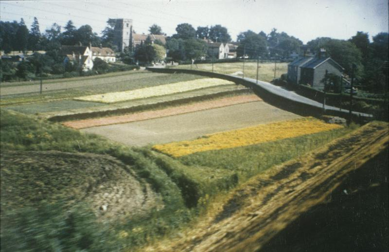 A photograph taken by Robert Sand of the 55th Fighter Group of Feering Nursery in Essex. Taken from a train travelling from Colchester to London on 8th July 1945. Written on slide casing: 'Feering Nursery, from train, Colchester to London 8/7/45.'